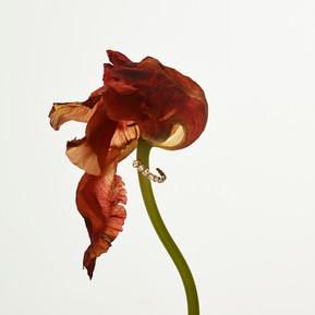 Sophie Bille Brahe 春夏2018珠寶系列/ Sophie Bille Brahe Spring/Summer'18 Jewellery Collection