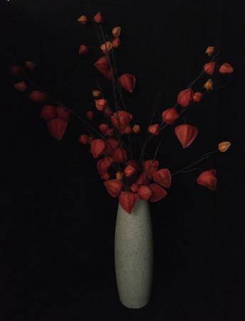 Physallis in Tall Vase