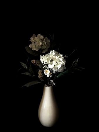 White Hydrangeas in White Vase