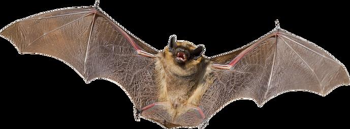 bat_PNG2.png