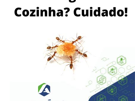 Dedetização para Formigas | Controle de Formigas