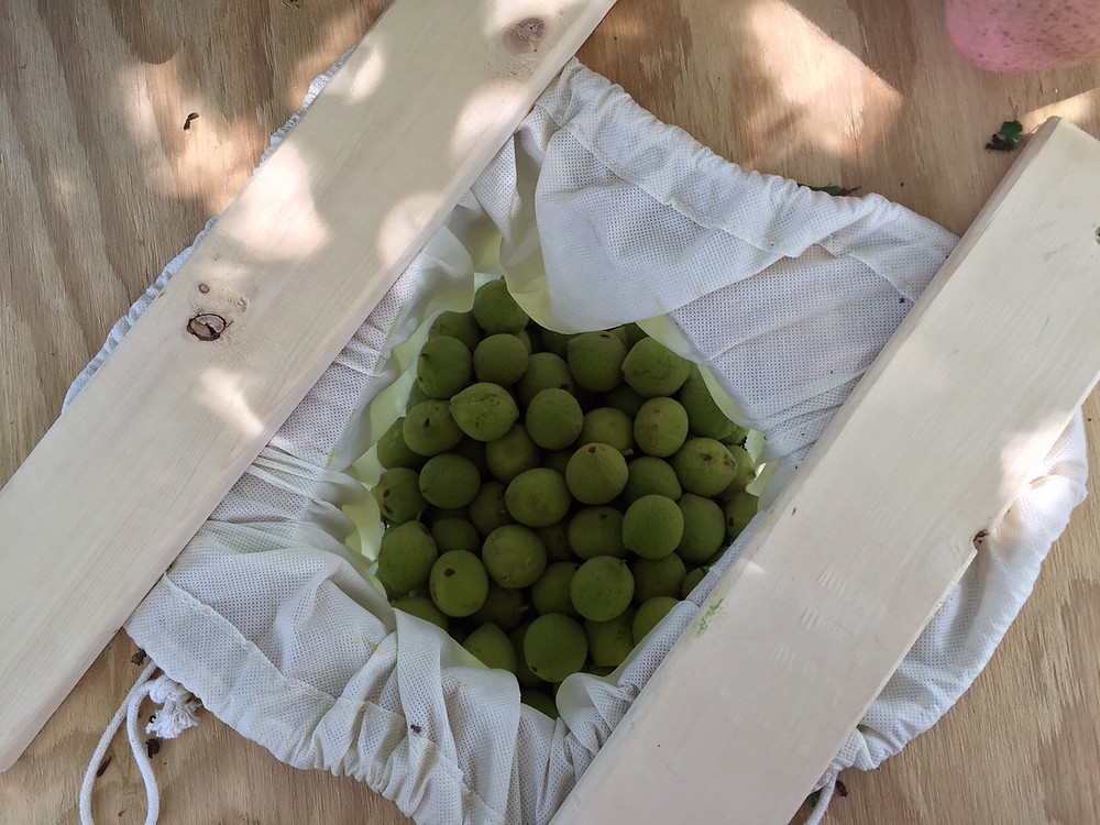 KWW KY Farm Walnut Harvest 8.jpg