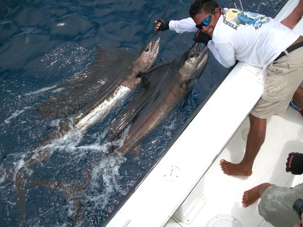 Fishing for Marlin