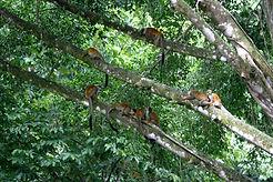 monkeys Costa Rica Tierra Magnifica