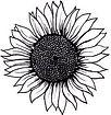blackandwhitesunflower.jpg