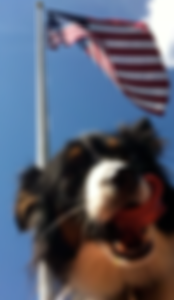toby under the flag.png