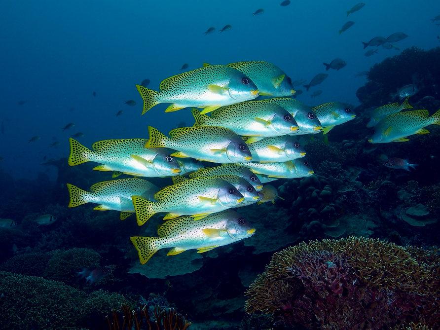 Pemba_Reef.jpg
