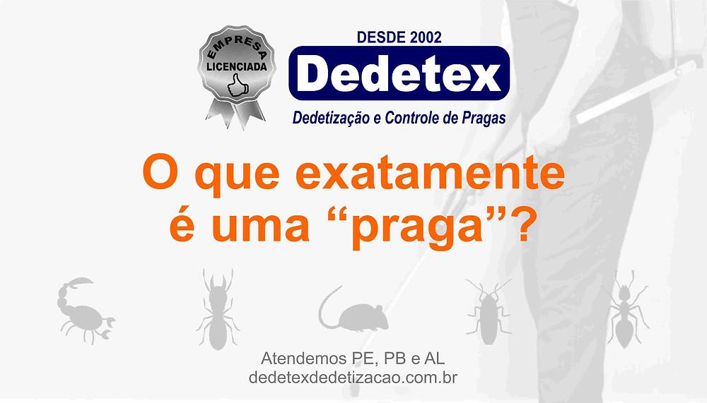 Dedetizadora em Recife-PE, Desratização, Descupinização e Desinsetização