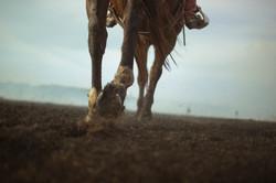 Hooves Running in Ash