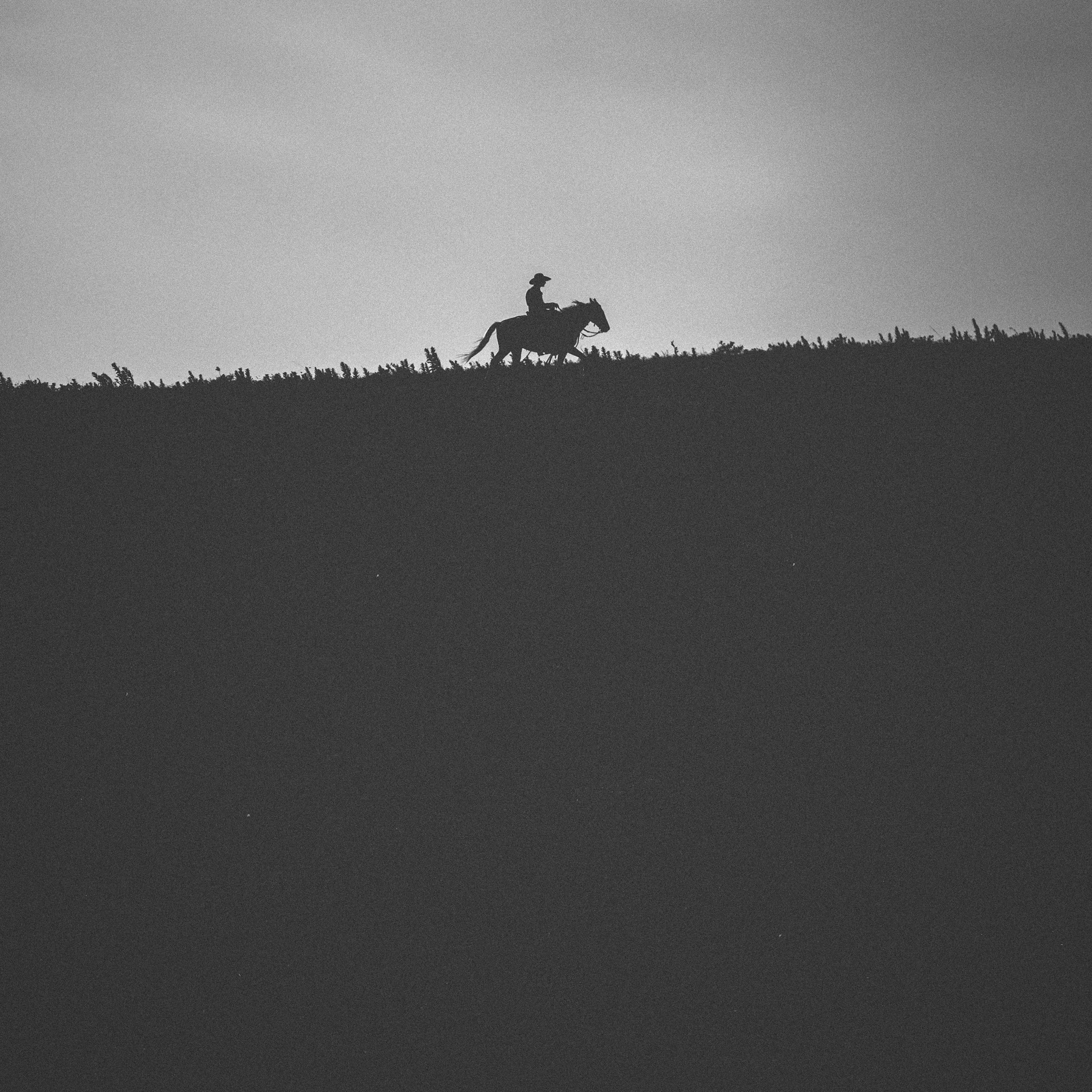 CattleDrive_1