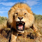 Riesgos legales: la fábula del león, el consultor y el gerente