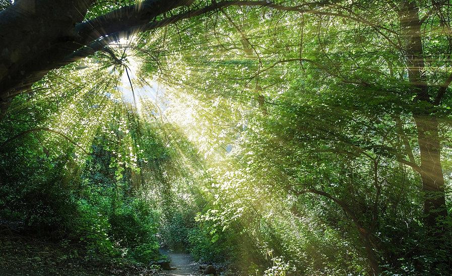 shutterstock_אור בין עצים .jpg