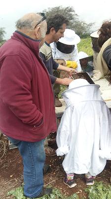 פתיחת כוורות, דבורים, אליס מילר, shantimayi