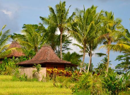 Bali: #TOP 5 miest v Ubude, ktoré som si zamilovala