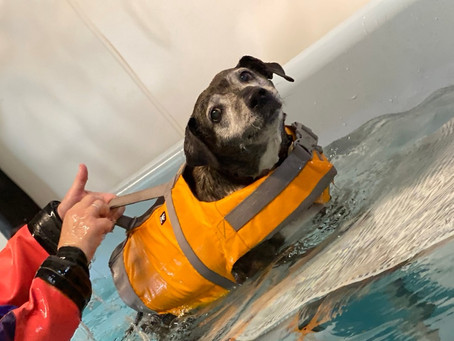 Cruciate ligament injuries and hydrotherapy