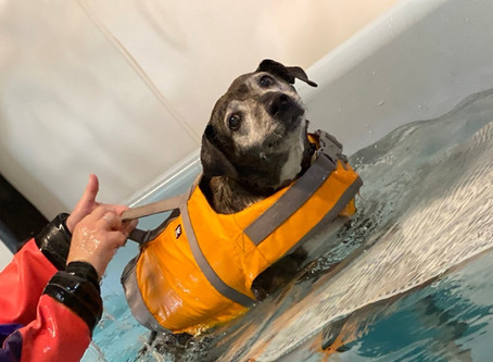 How can hydrotherapy help your dog?