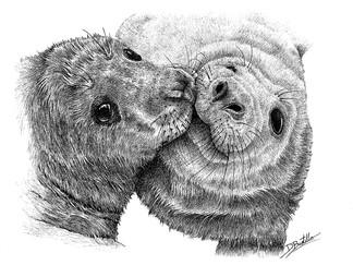 focas grises