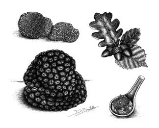 Tuber melanosporum