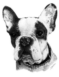 Satur (bulldog)