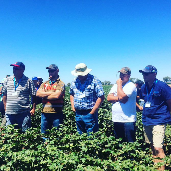 Southern cotton industry Innovation Tour