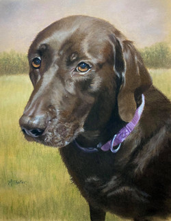 Snickers, Pastel 8x10, Sold