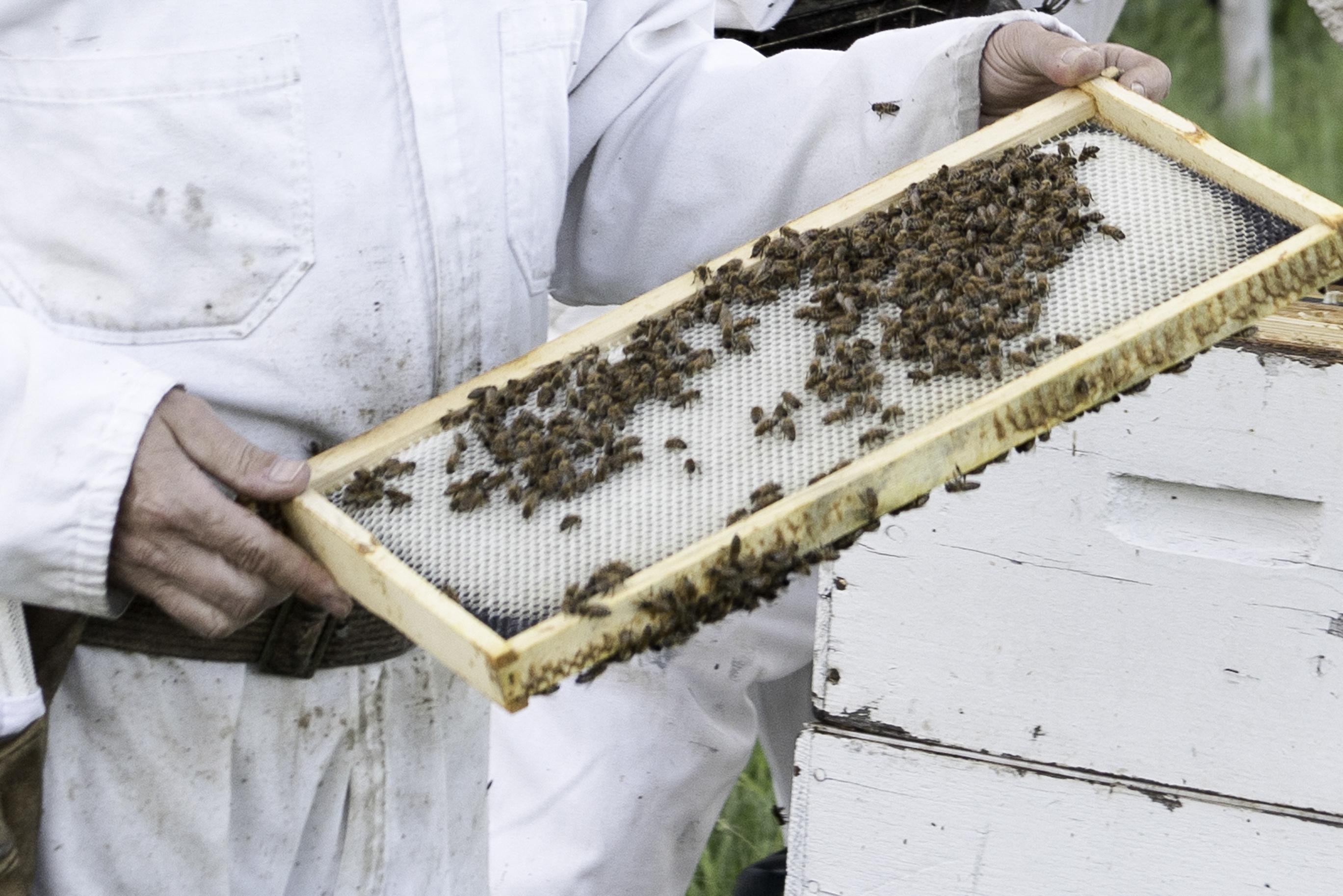 Un cadre dans la ruche