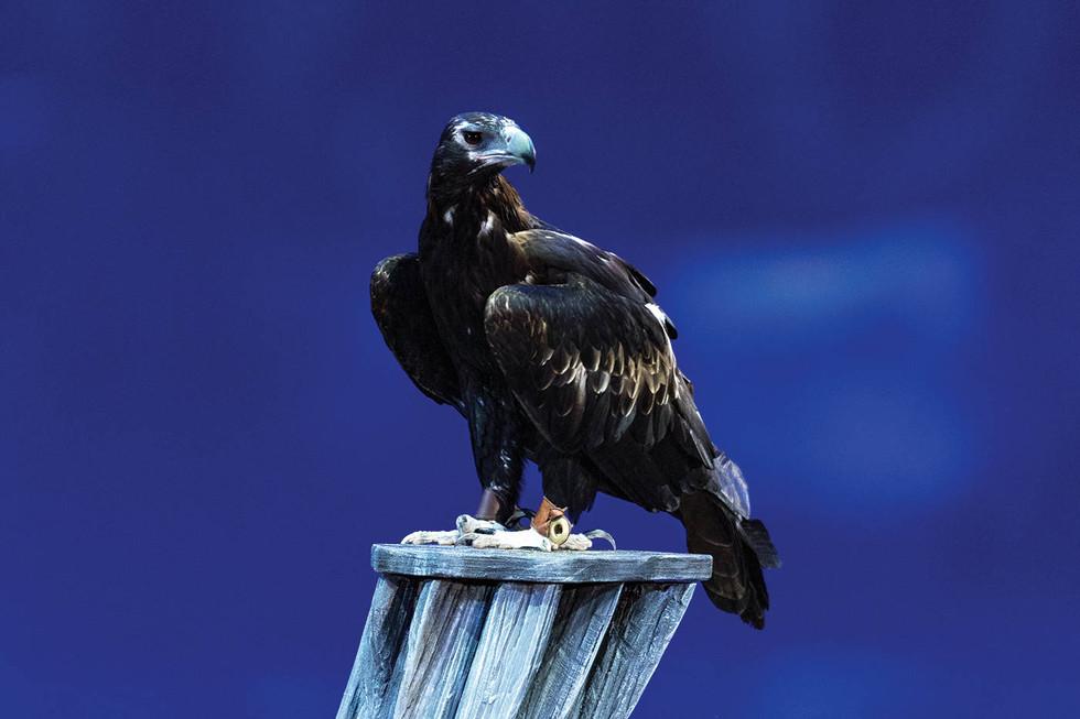 id38_1400x933_eagle.jpg