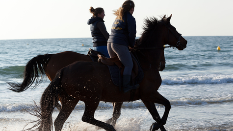 Galloping through the surf