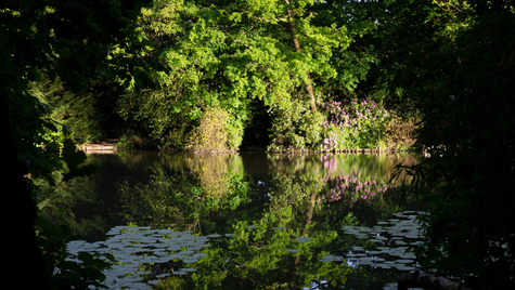 Bower reflection