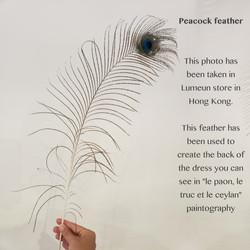 PHOTOS BARCODE_ peacock feather