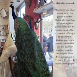 PHOTOS BARCODE_majestic peacock