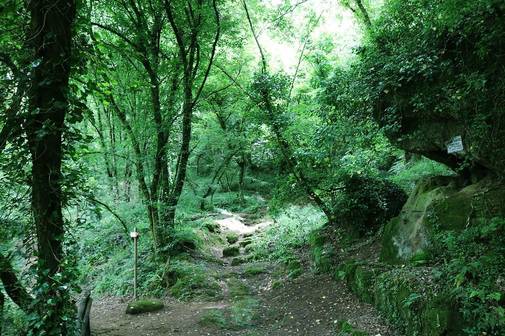 sentiero nel bosco cascate del picchio