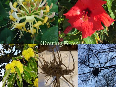 2021年9月開催予定のハーブコースのお知らせ〜「植物の特徴から学ぶ英国ハーブ療法コース」と「気質から学ぶ英国ハーブ療法コース」〜