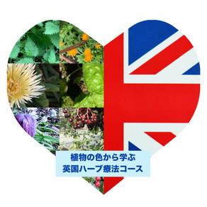 2021年1月9日開講!植物の色から学ぶ英国ハーブ療法オンラインコース(全5回)