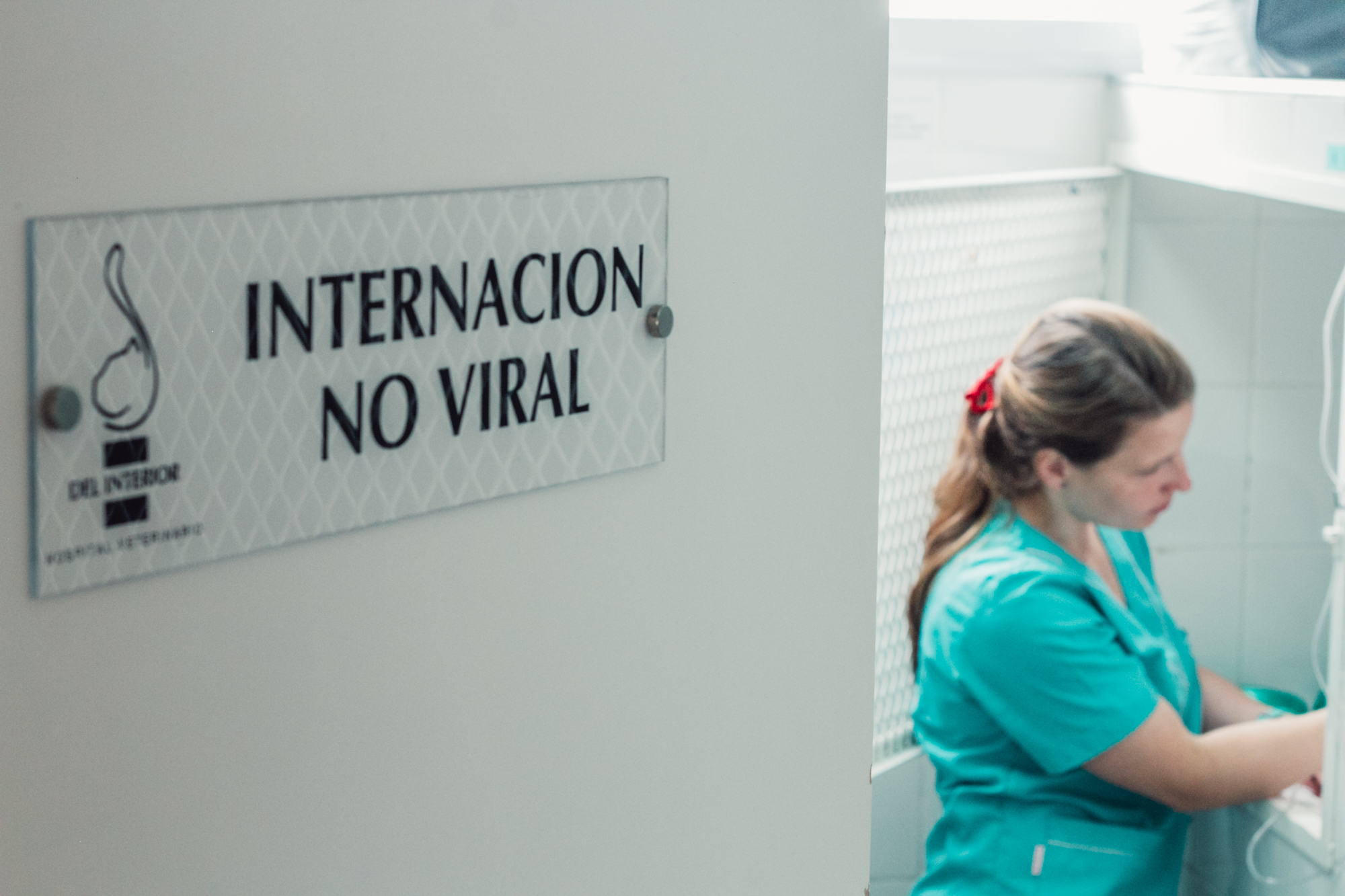 Del Interior Hospital Veterinario -1123.