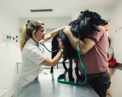 Del Interior Hospital Veterinario - 18