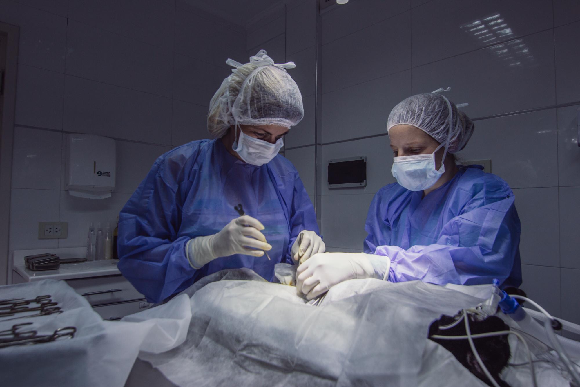 Del Interior Hospital Veterinario -4925.