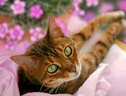 cat-with-flowers.jpg