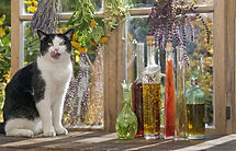 esencias florales gato.jpg