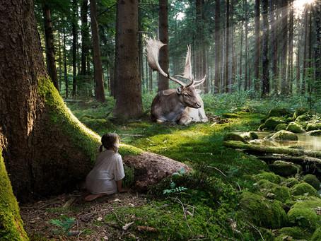 Shinrin Yoku: Baños del Bosque Sagrado en Ourense.