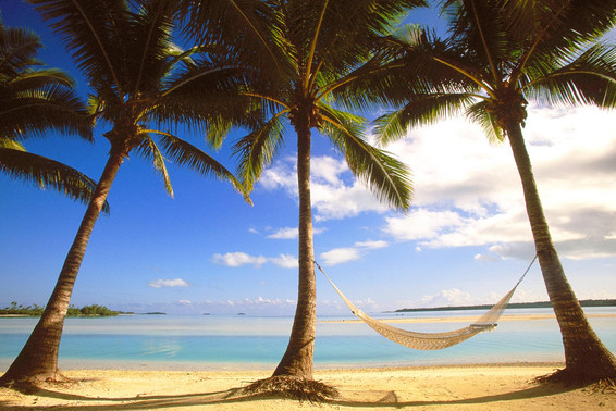 hammock-palm_00287463.jpg