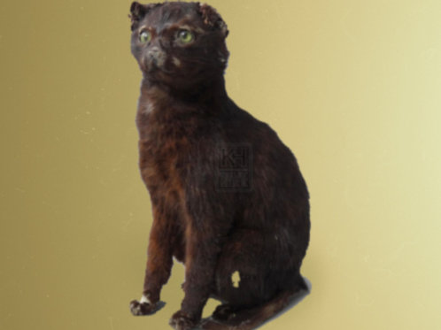 Engstrom taxidermy cat late 80s