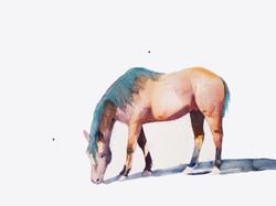 horseoffwhitegraffic.jpg