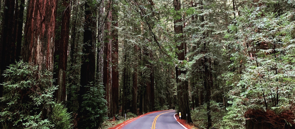 A weekend in the Redwoods