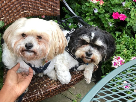 Leave-In Conditioner & Other Natural Hair Principles I Apply to My Dogs