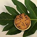 ʻUlu Chocolate Chip Cookies