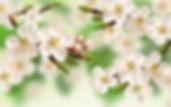 Flora Papier Aachen
