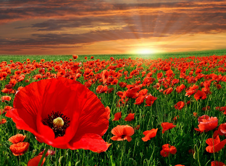 Make our ANZAC's Proud.