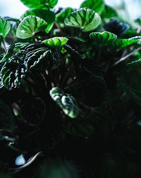 Sip and Plant Tour_2020_Cinema Greens_00
