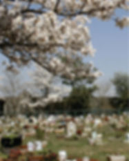 Cemitério de Animais - Gratuito | GRUPO SIM | Piracicaba
